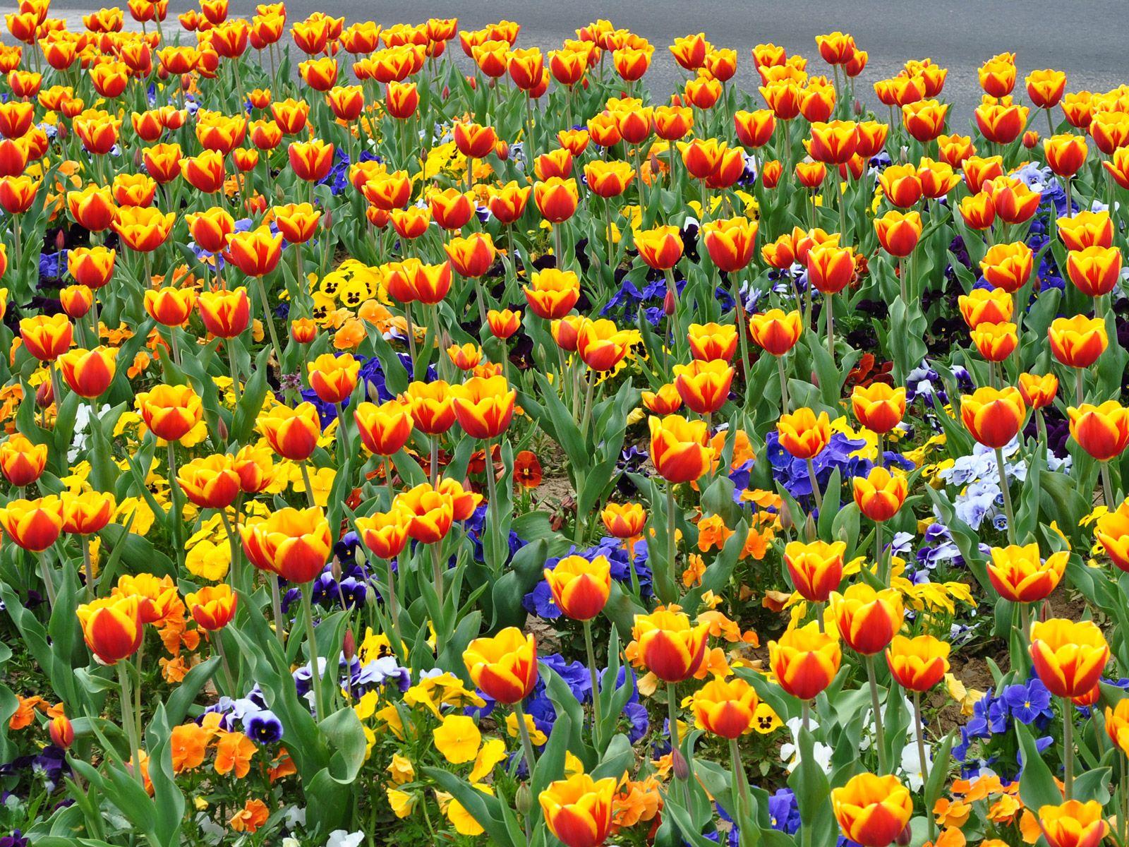 Gepind van kepguru Spring flowers, Flowers