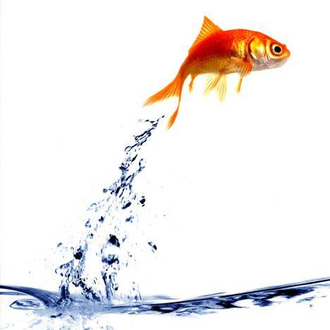 Resultado de imagen de TO BE A FISH OUT OF WATER