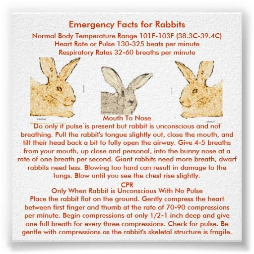 Bunny Trivia 9 Amazing Facts About Pet Rabbits: Emergency Facts For Flemish Giant Rabbits Poster