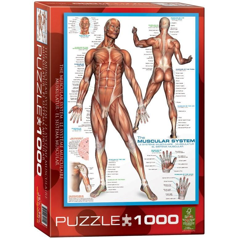 Jigsaw Puzzle Love: The Muscular System | Jigsaw Puzzle Love | Pinterest