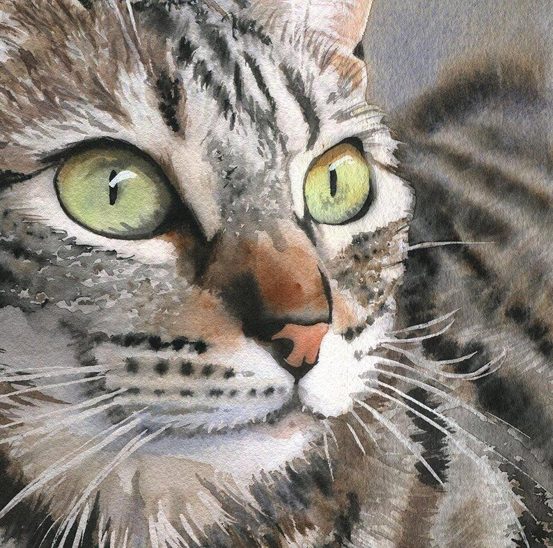 Tabby Cat Art Print Of My Watercolor Painting Brown Gray Black Tiger Striped Large Big Huge Canvas Custom Cat Art Print Cat Art Tabby Cat