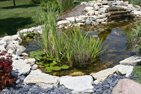 Pond design plant vs rock edges pond trade magazine for Ornamental fish pond design
