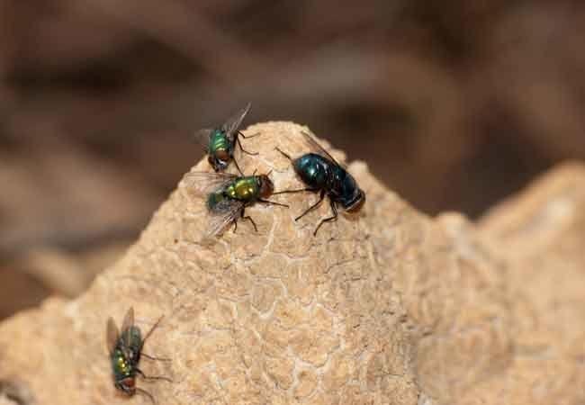 How To: Get Rid of Flies Outside   Get rid of flies, Flies ...