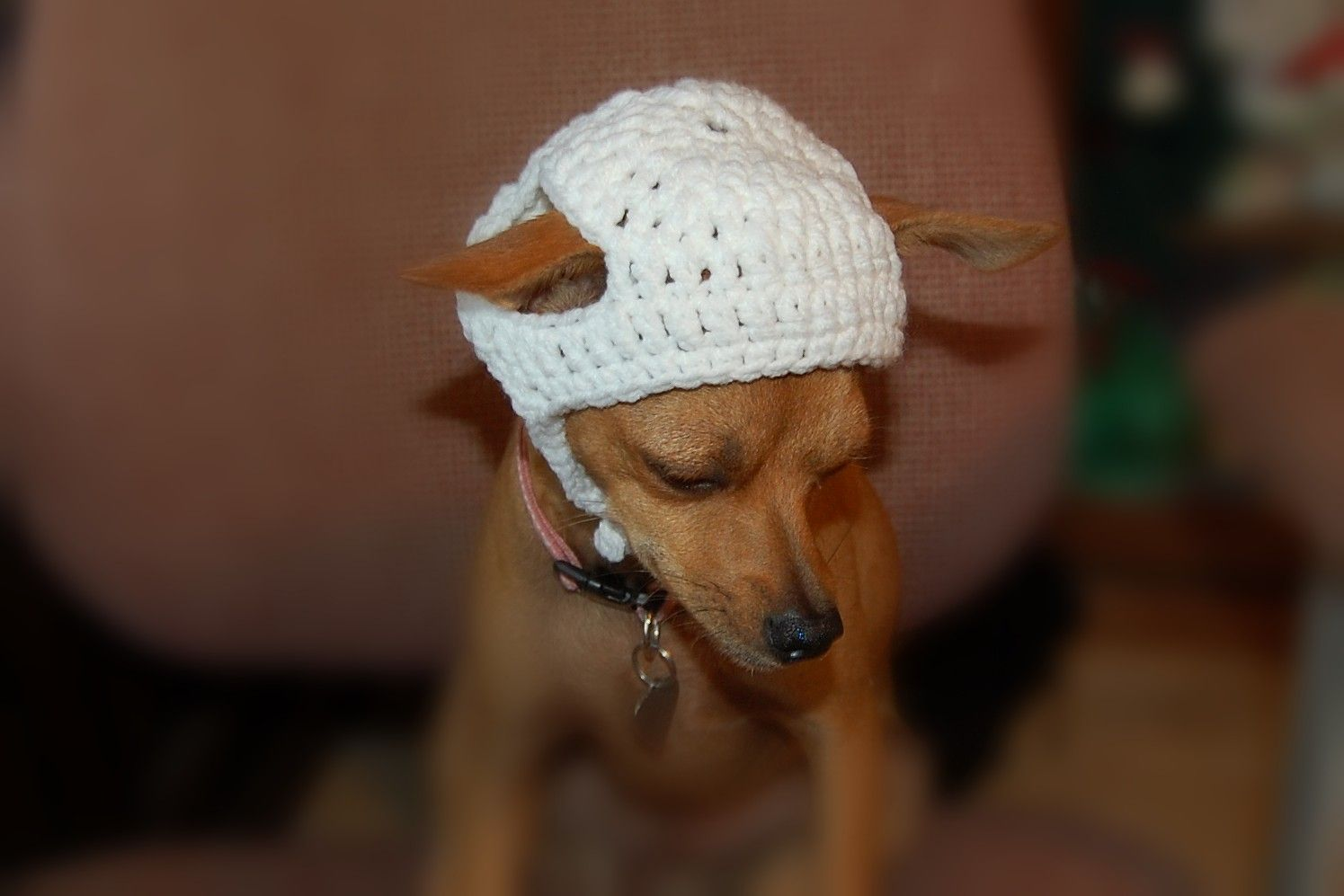 Instant Download Crochet Pattern - Basic Dog Hat - Chihuahuhua ...