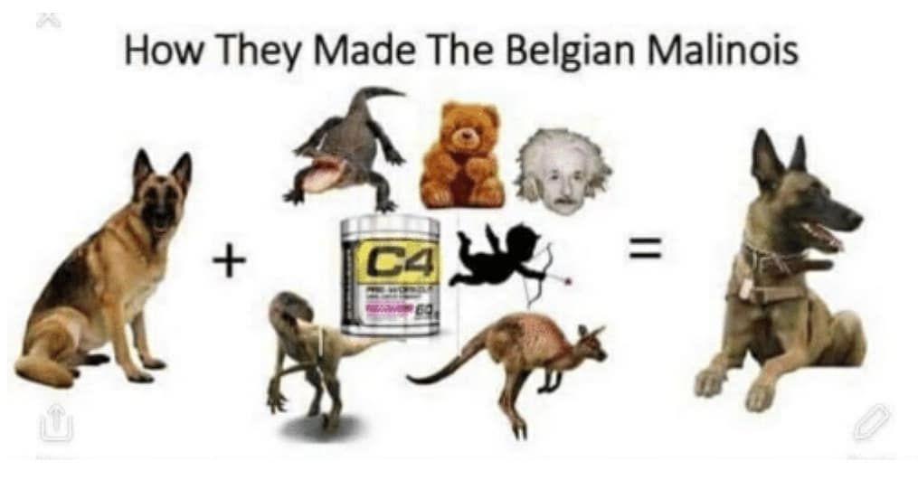 Check what new we have in store Love pitbulls   Belgischer ...