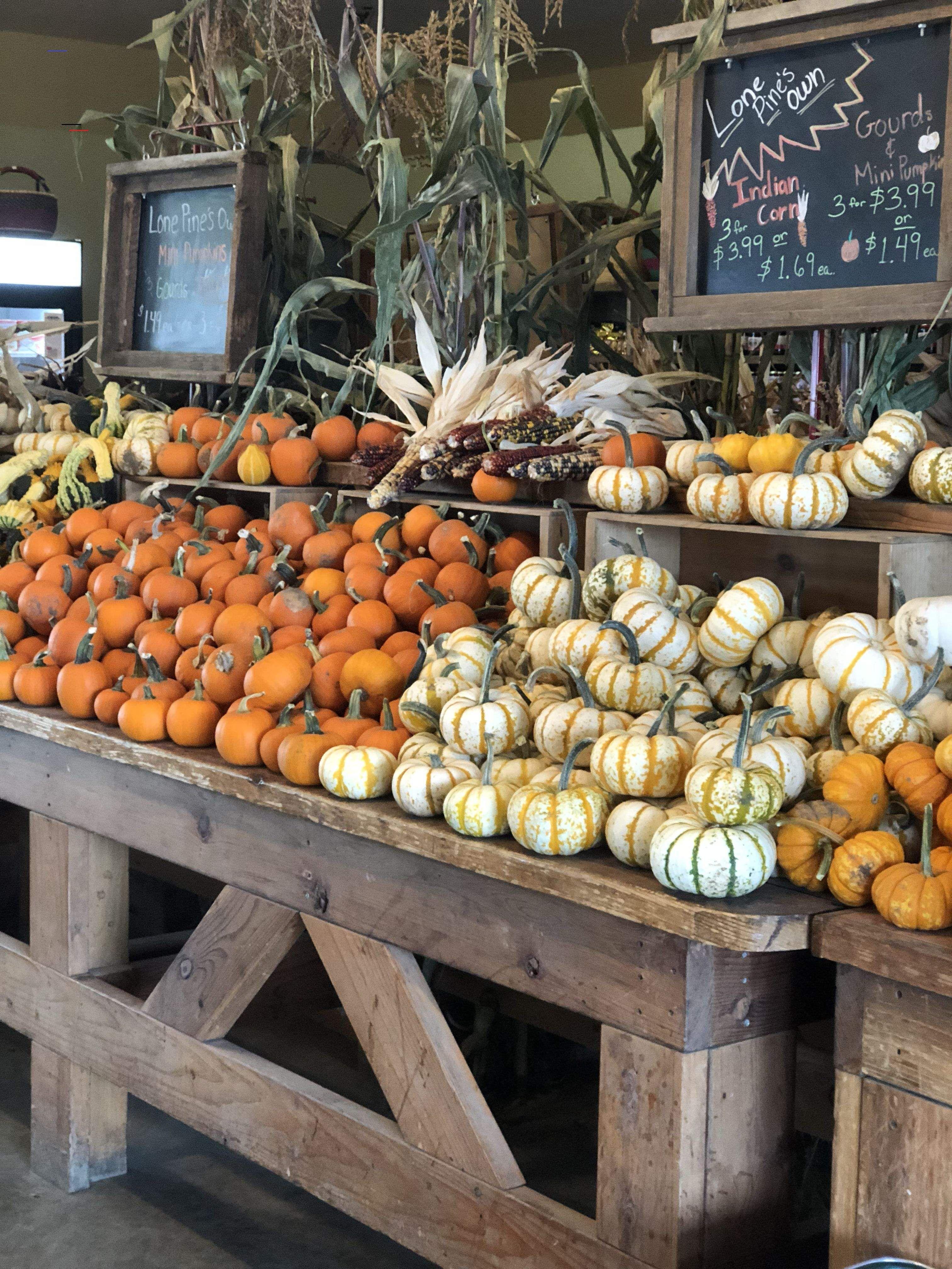 Pumpkin patch pumpkinpatch in 2020 Pumpkin patch farm