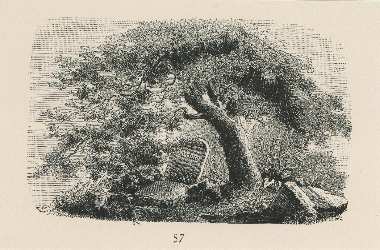 Arbol y tumba