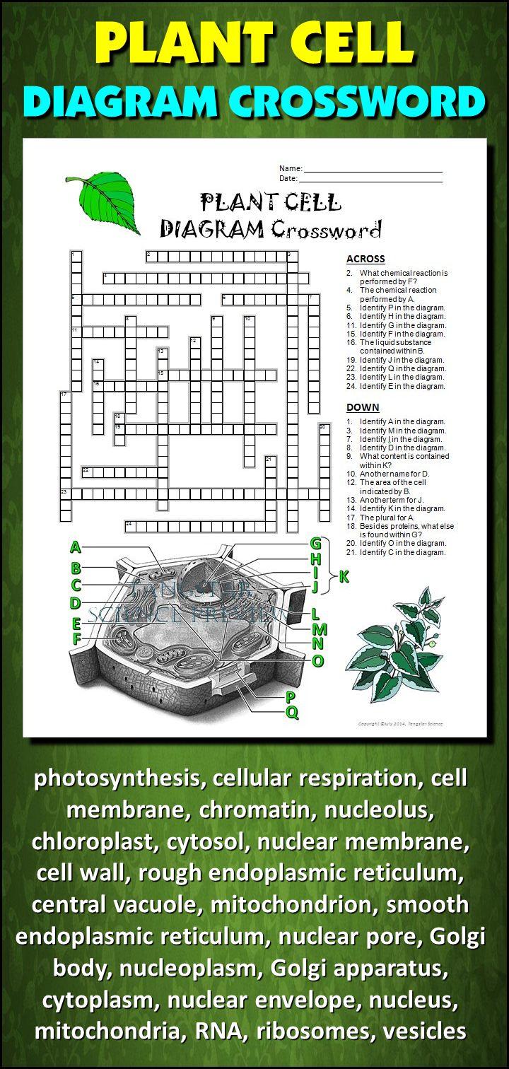 Plant Cell Crossword With Diagram  Editable