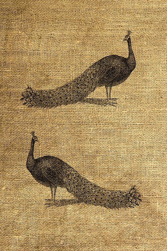 This listing is for one 8.5 X 11 digital sheet with 2 vintage illustrations of a peacock. Actual image size is about 4 X6 (each) on a 300 dpi jpeg file.