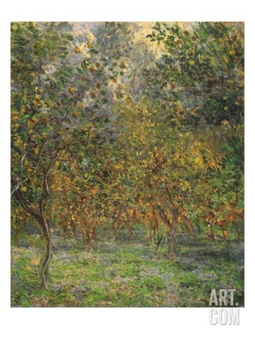 Lemon Trees, 1884 Giclee Print by Claude Monet at Art.com