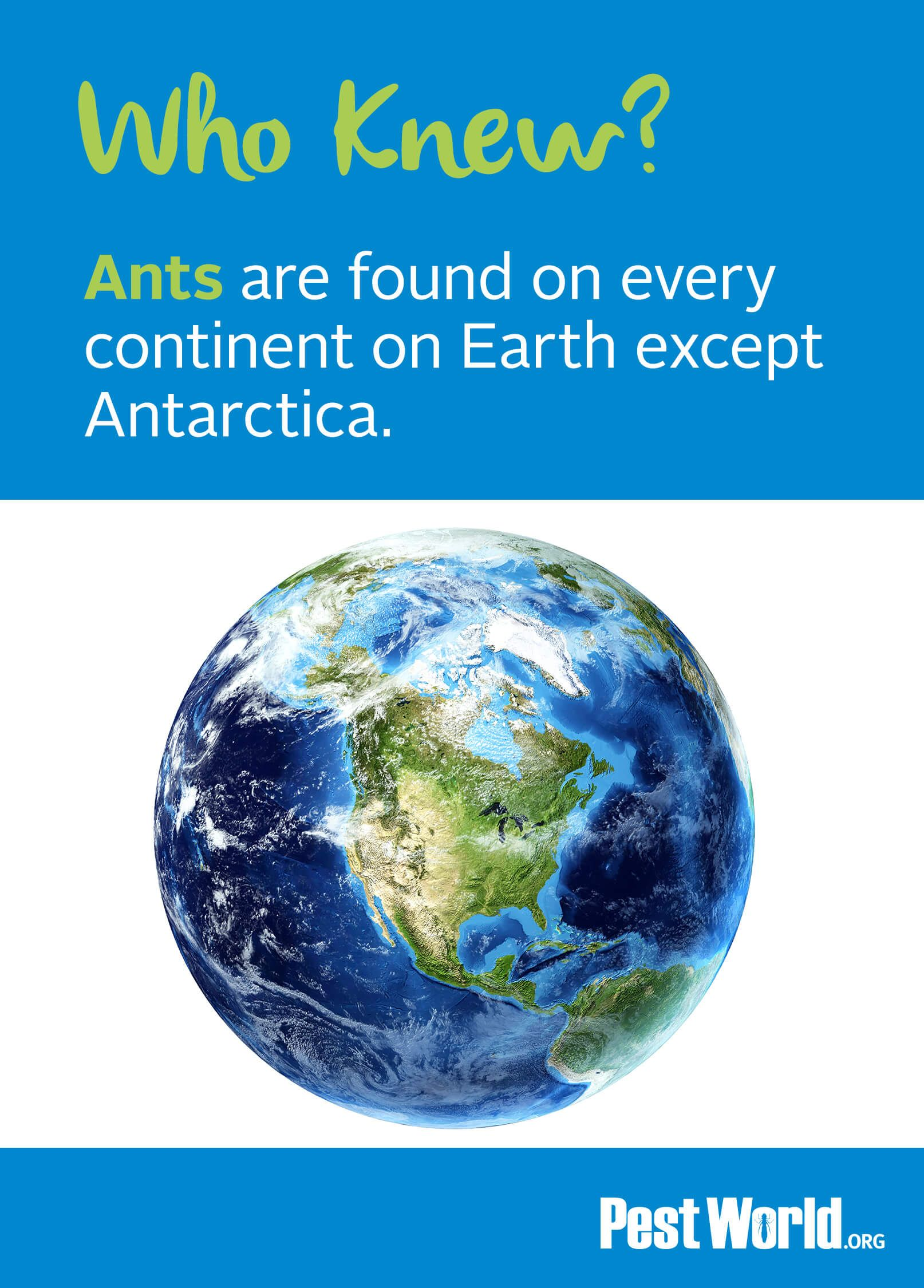 The vast distribution of ants is rivaled only by that of humans. Very impressive for such little guys! Identify the types of ants in your home here.