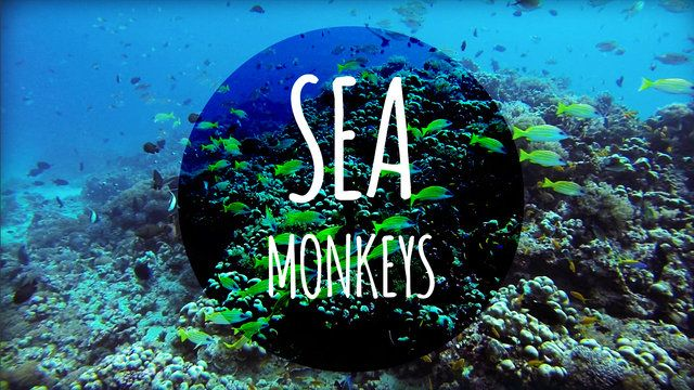 "Video Sansibar, Tansania: ""Sea monkeys"""
