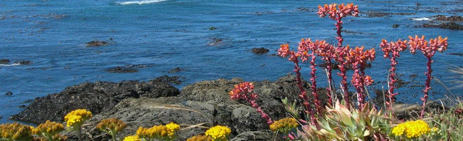 September Camping Trip of the Month is to San Simeon here in CA.