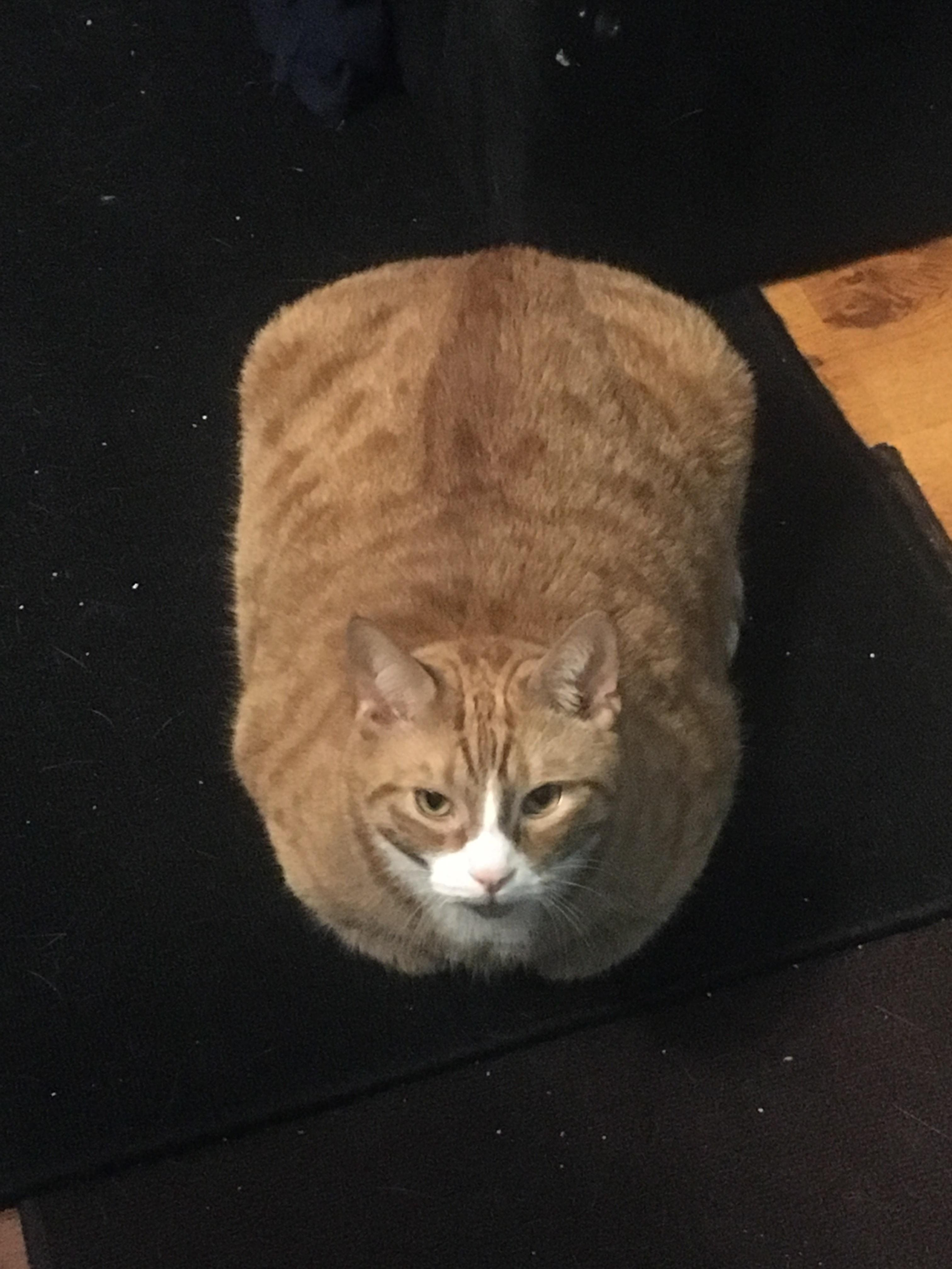 Big Round Loaf Of Bread Meow Moe Cute Cats Kittens Cutest Cats And Kittens