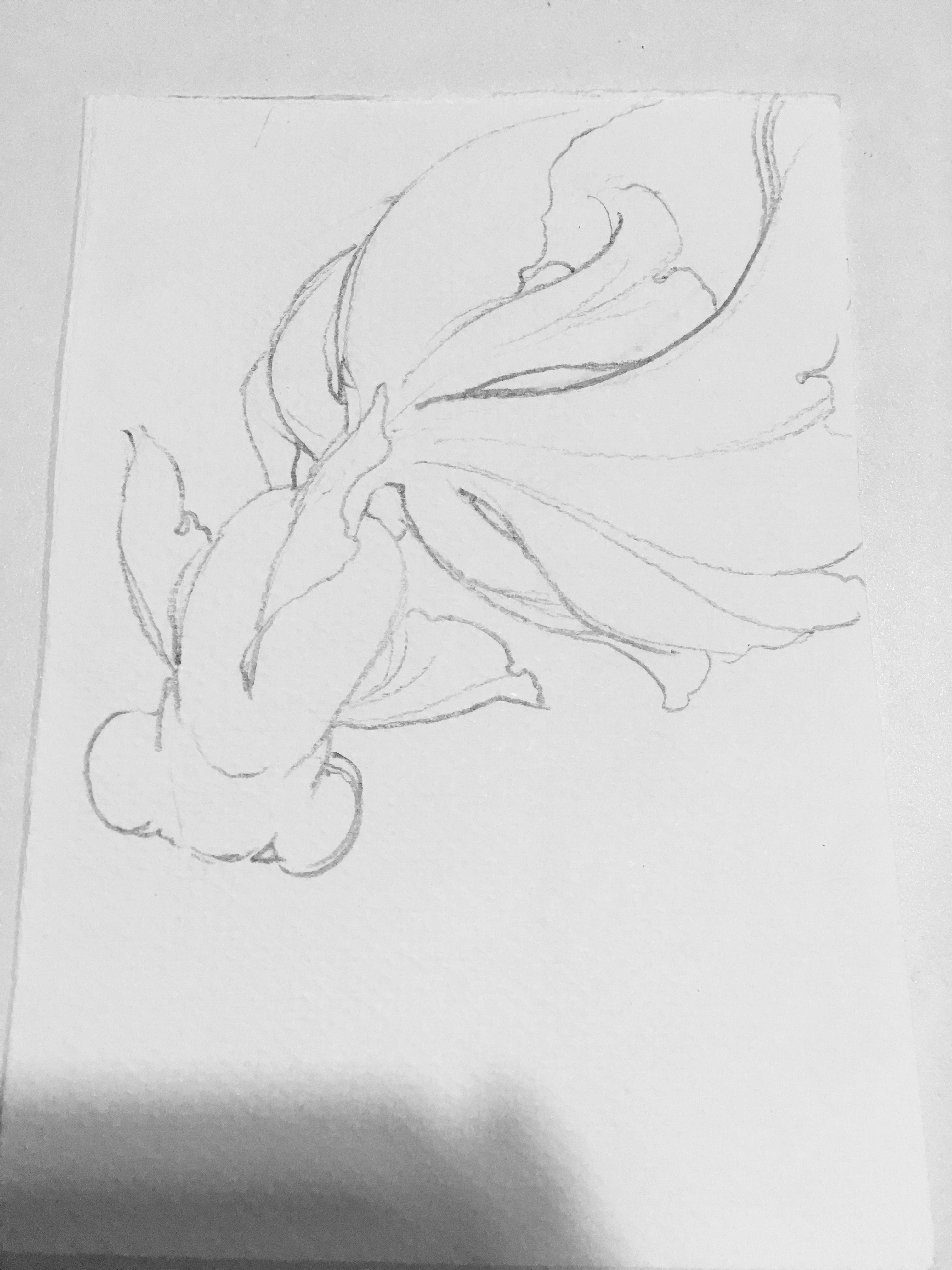 Pin de 森 en 金魚 | Pinterest | Acuarela, Dibujo y Anatomía