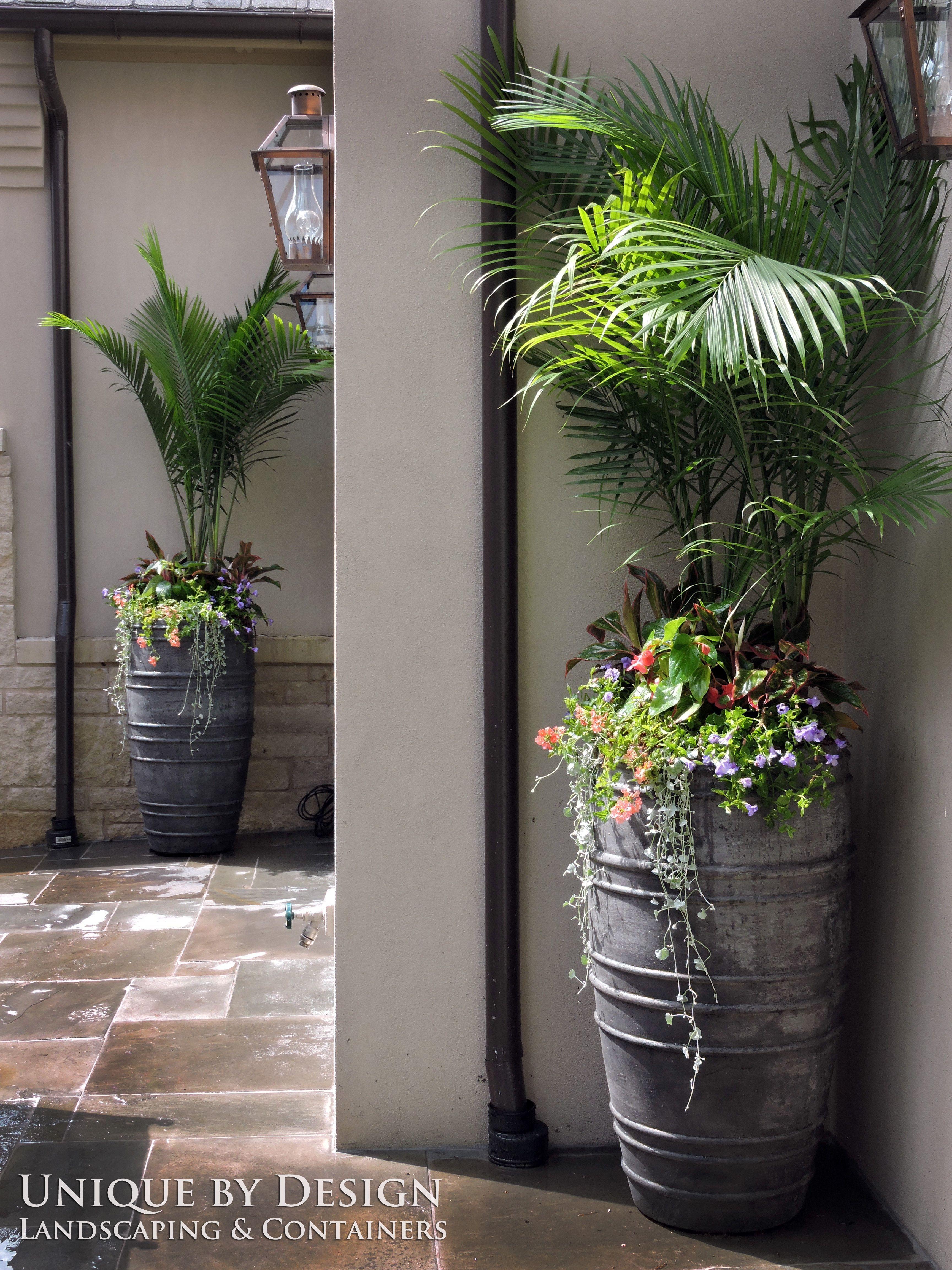Plantas decoraciones pinterest plantas macetas y for Jardines decoraciones plantas
