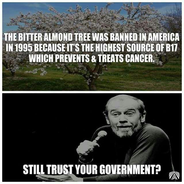 Bitter Almond Tree  Cancer