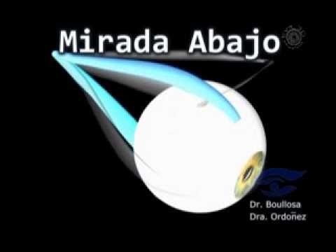 www.oftalmyc.com Animación sobre los movimientos normales de los ...