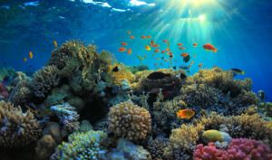Coral Itself May Play Important Role In Regulating Local Climate