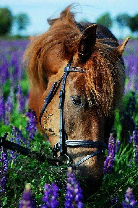 #horses #urbinohorses #tenutasantigiacomoefilippo