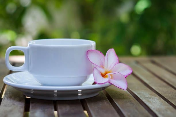 Blooming White Pink Plumeria Flower Beside Ceramic Cup Of Tea Stock Photo Tea Tea Cups Coffee With Friends