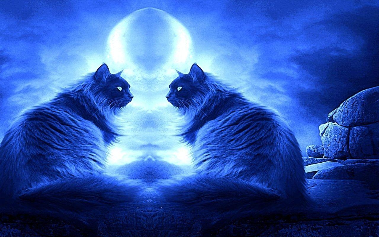 роллы кошки под луной картинки бесплатно широкоформатные