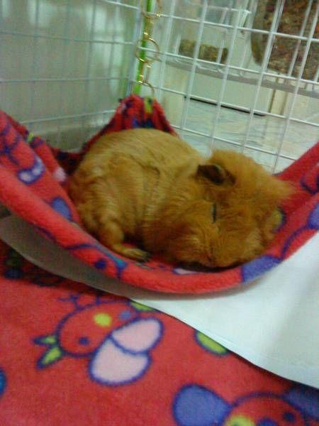 Sleepy Fred ♥