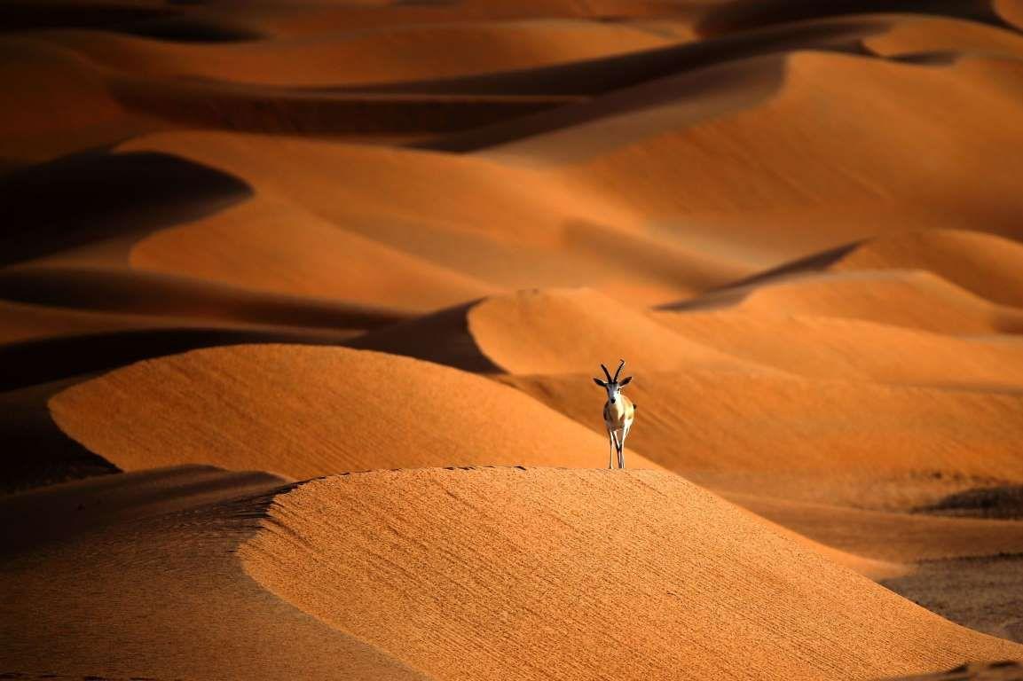 Animal TOPSHOT UAE ANIMALS NATURE KARIM SAHIBAFPGetty ImagesGetty