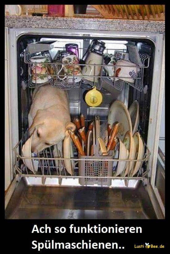 Lustige Tierbilder Süßer Hund in Spülmaschine leckt die
