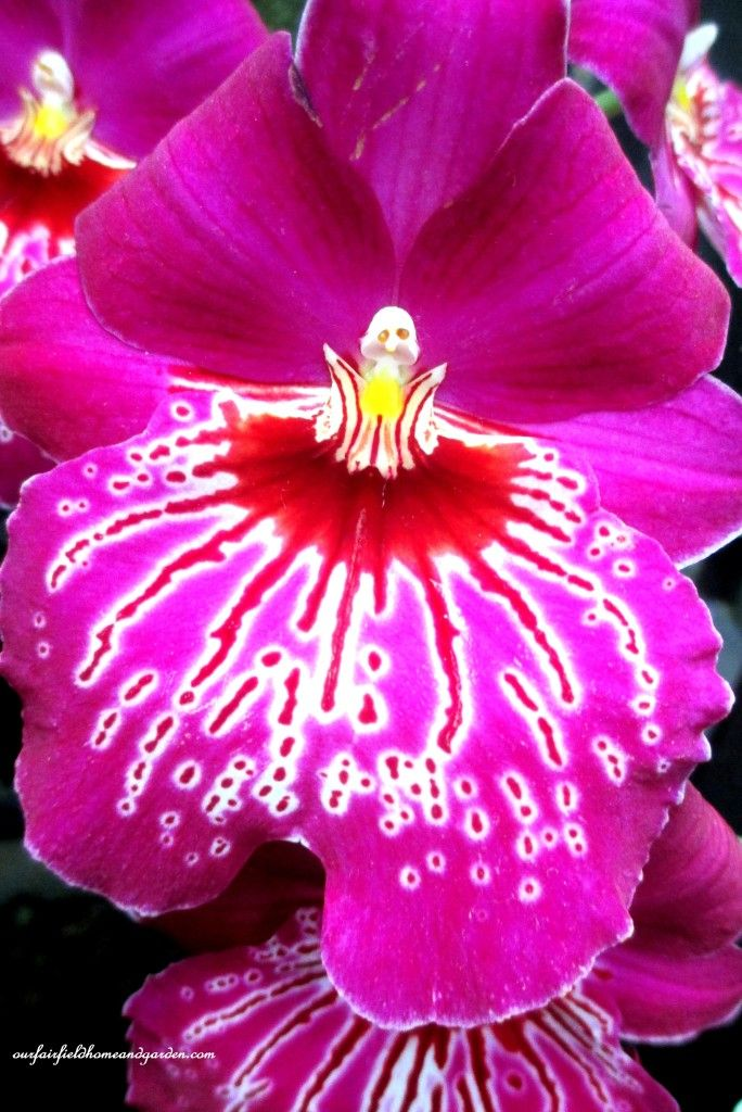 A Visit to Longwood Gardens Orchid Extravaganza 2015   http://ourfairfieldhomeandgarden.com/a-visit-to-longwood-gardens-orchid-extravaganza-2015/