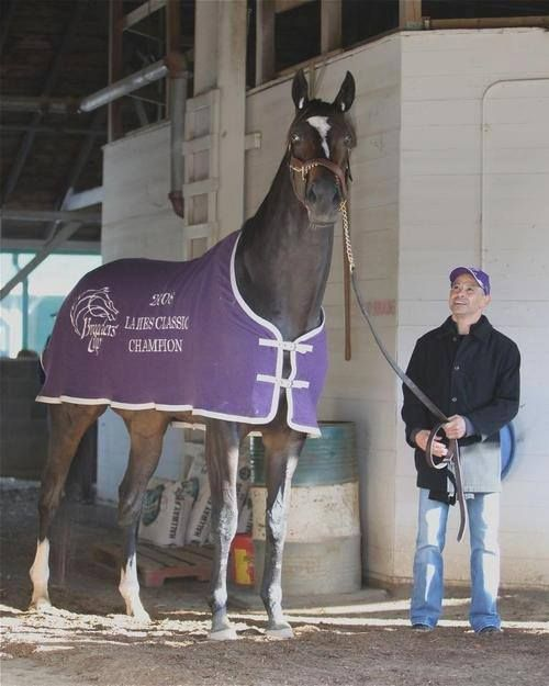 Zenyatta - she looks ginormous in this picture, what a fantastic mare!