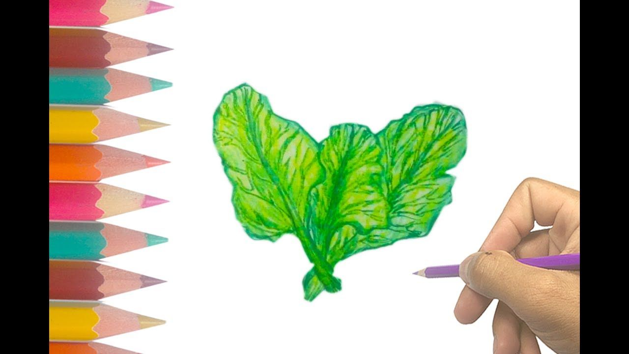 Easy Step by Step Vegetable Drawing for kids   How to draw ...
