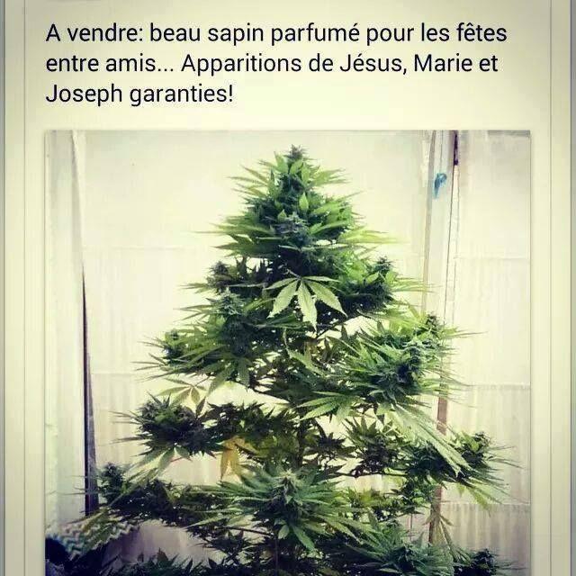 A Prévoir Pour Les Fêtes Blagues De Noël Arbres De