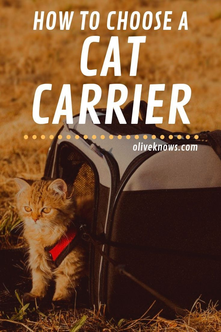 How to choose a cat carrier cat carrier cat training