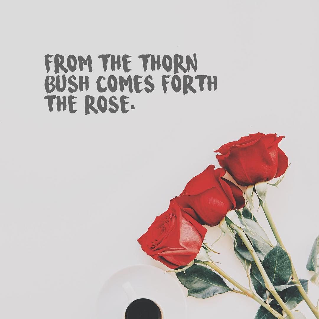 From The Thorn Bush Comes Forth The Rose Quotes About Flowers Rose Quotes Flower Quotes Flower Quotes Inspirational