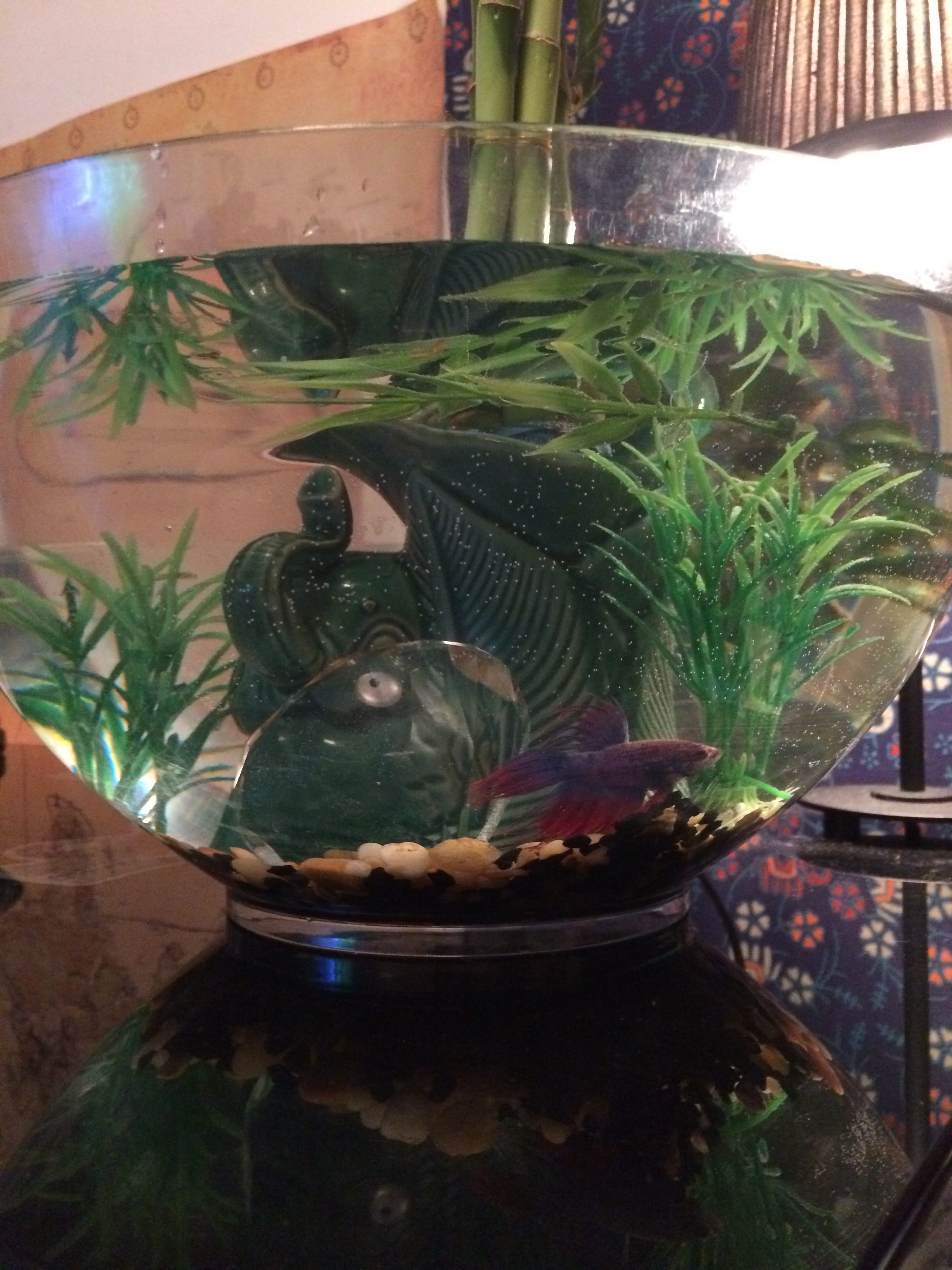Diy betta pond 2 gallon or more bowl A heater at least 10 watts 25