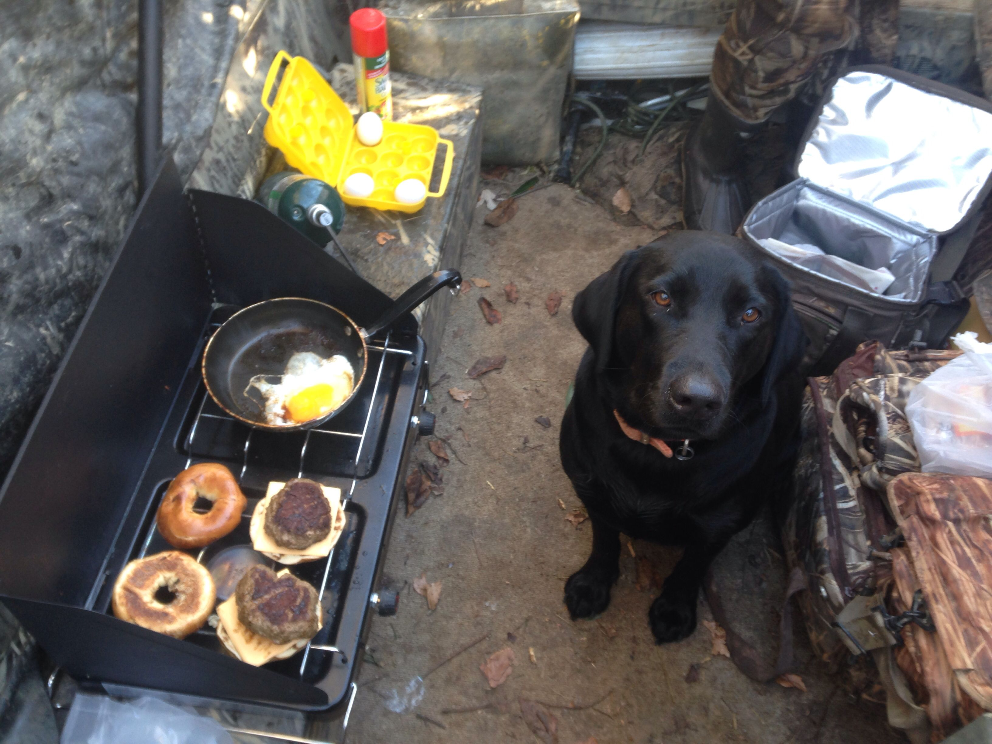 Cooking Breakfast In The Duck Blind Outdoors Quail