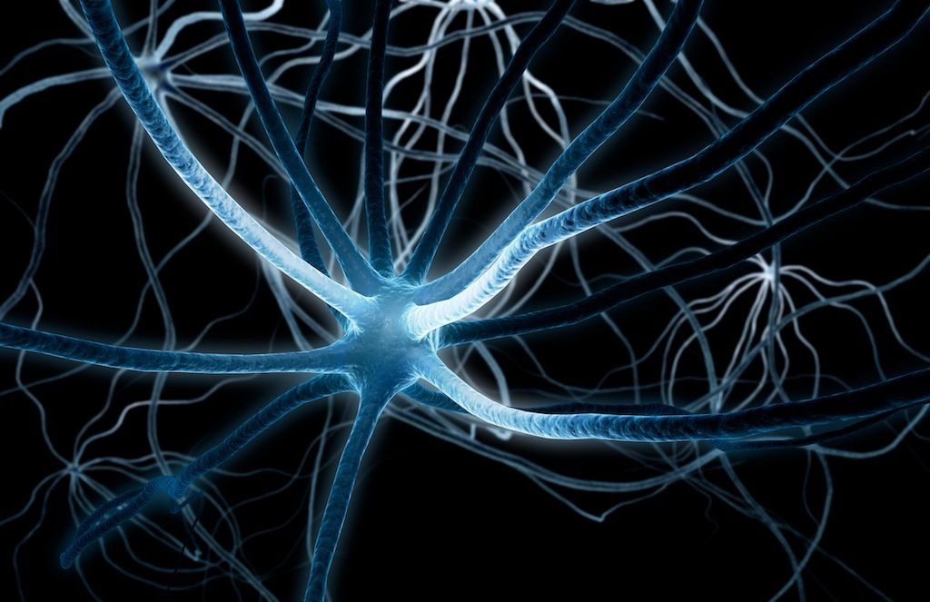 Neurons With Images Neurons Brain Activities Oh Beautiful