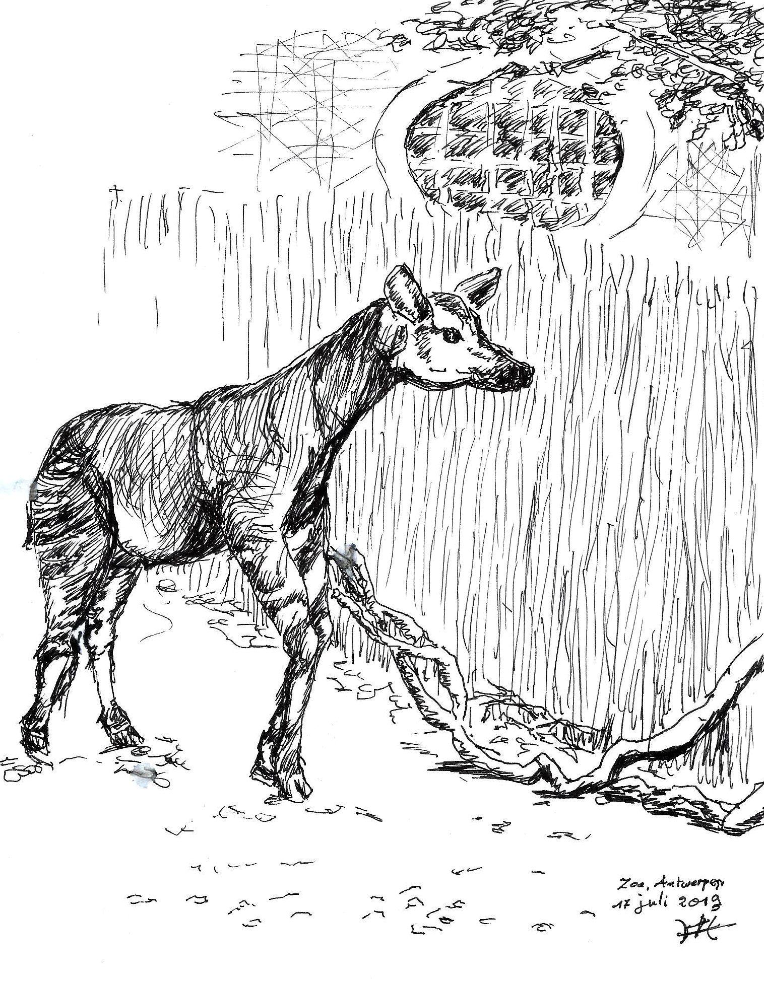 Pin Van Harry Waterschoot Op Recente Schetsen Schilderijen Grafiek Okapi Dieren Tekenen Dieren