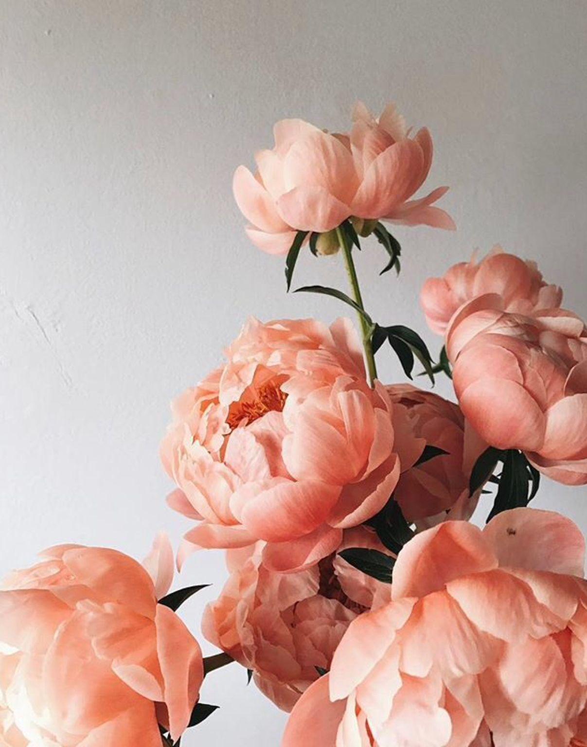 Pin By Emma Novak On Flora Flower Aesthetic Pretty Flowers Beautiful Flowers