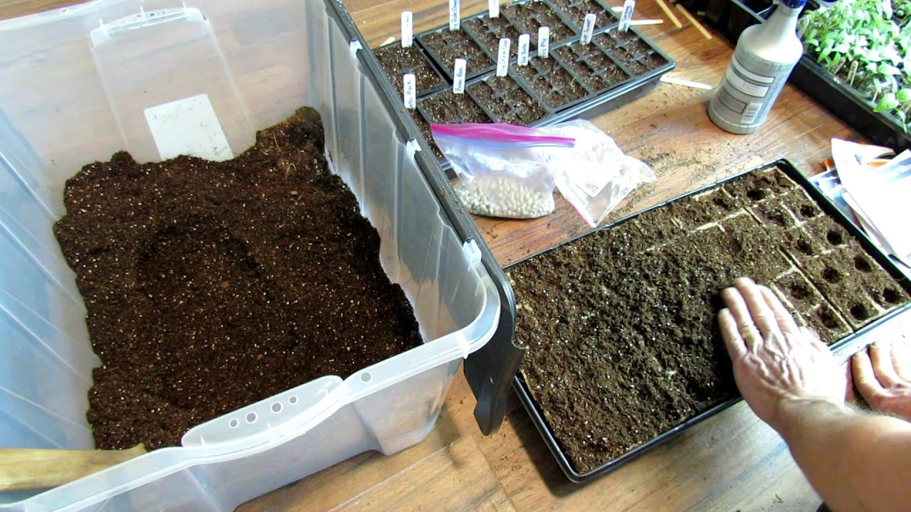 Seed Starting Vegetable Plants In Outdoors Without Grow 640 x 480