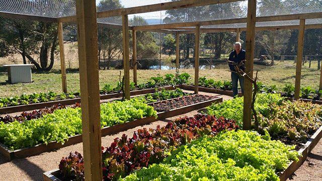 Tallowa Dam Enclosed Garden Enclosed Vegetable Garden 400 x 300