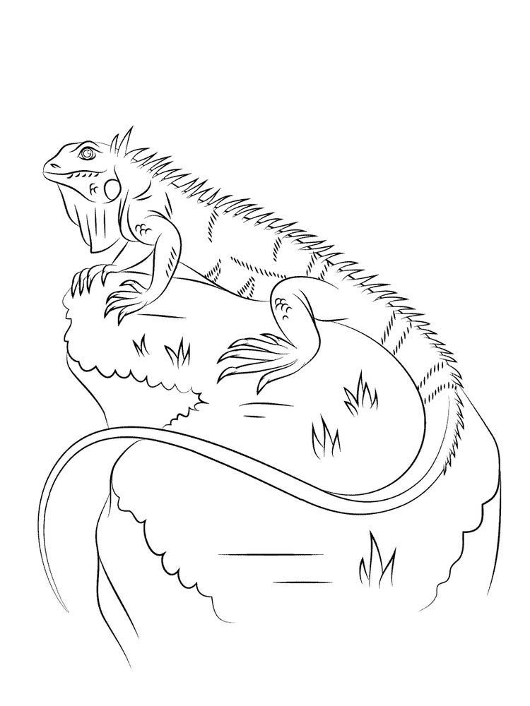 Iguana Coloring Pages Free Lately Keeping Reptiles Is Not Just A Hobby For Some People But It Is Also A Lifestyl Coloring Pages Animal Coloring Pages Iguana