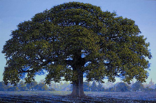 """Oak Tree"" - Francis Hamel"