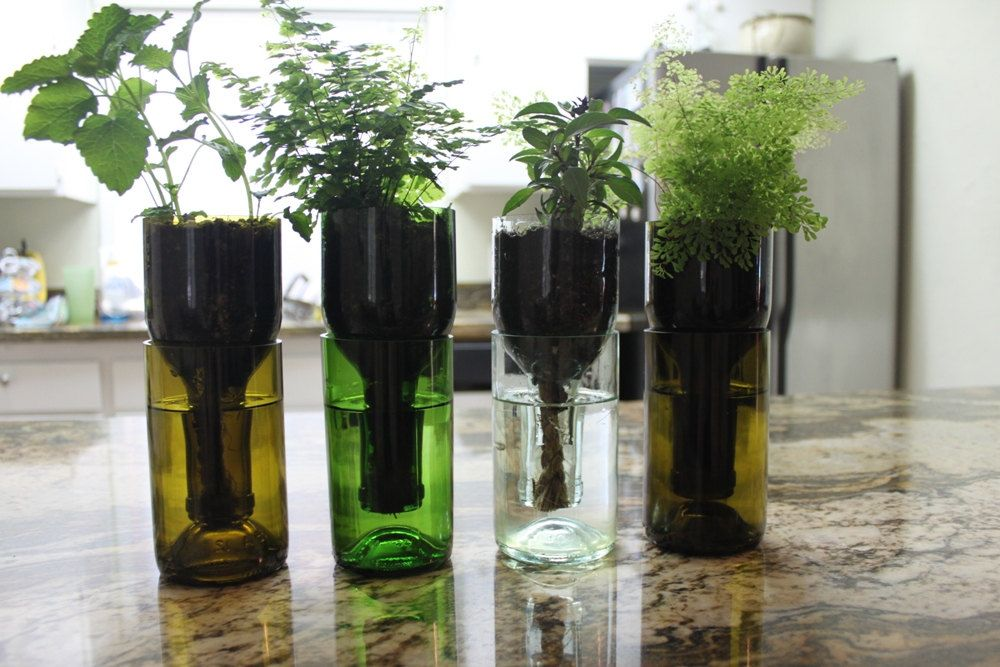 Clear Wine Bottle Hydro Planter With Y Etching 1 One Self Watering Herb Grow Indoors Eco Gardener Naturalist