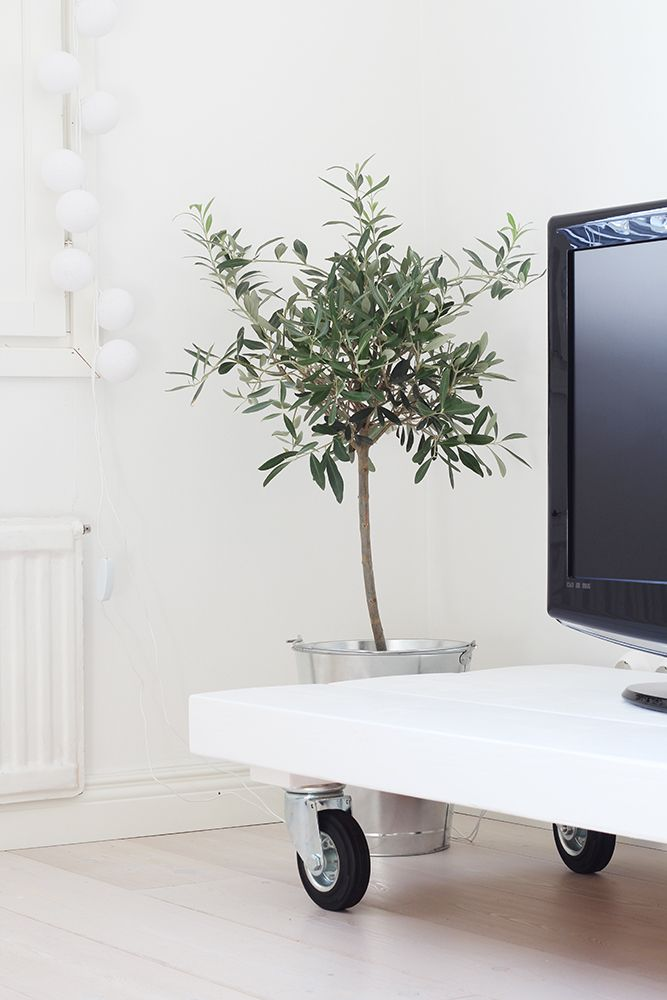 Living room - White tv-table and olive tree