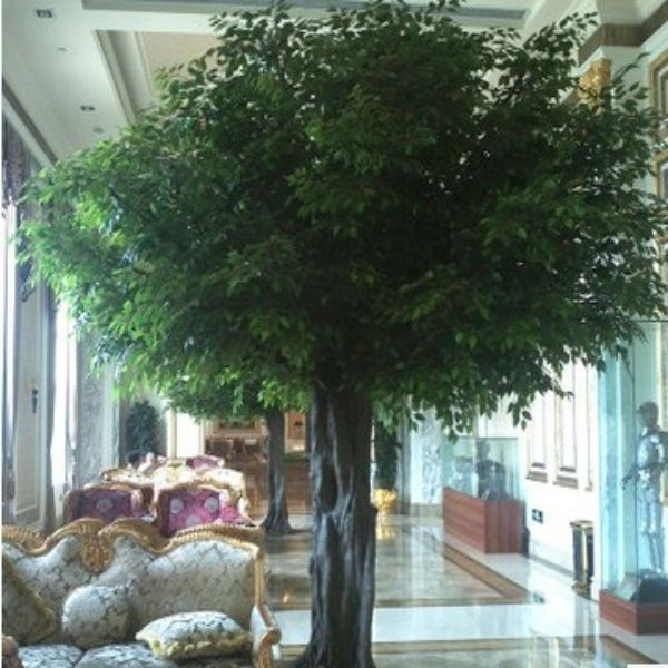 Luxurious Banyan Tree Large Indoor Trees To Plant Ficus Garden Landscape Design