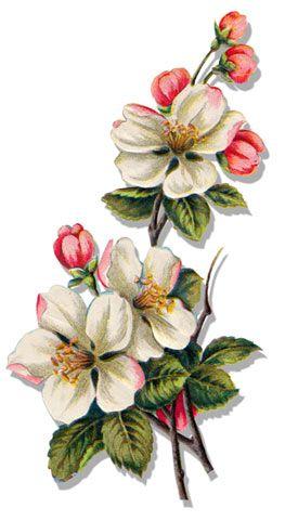 Botanique 09 PNG