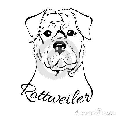 Rottweiler dog head | Bull terriers | Pinterest | Mascotas y Camisetas