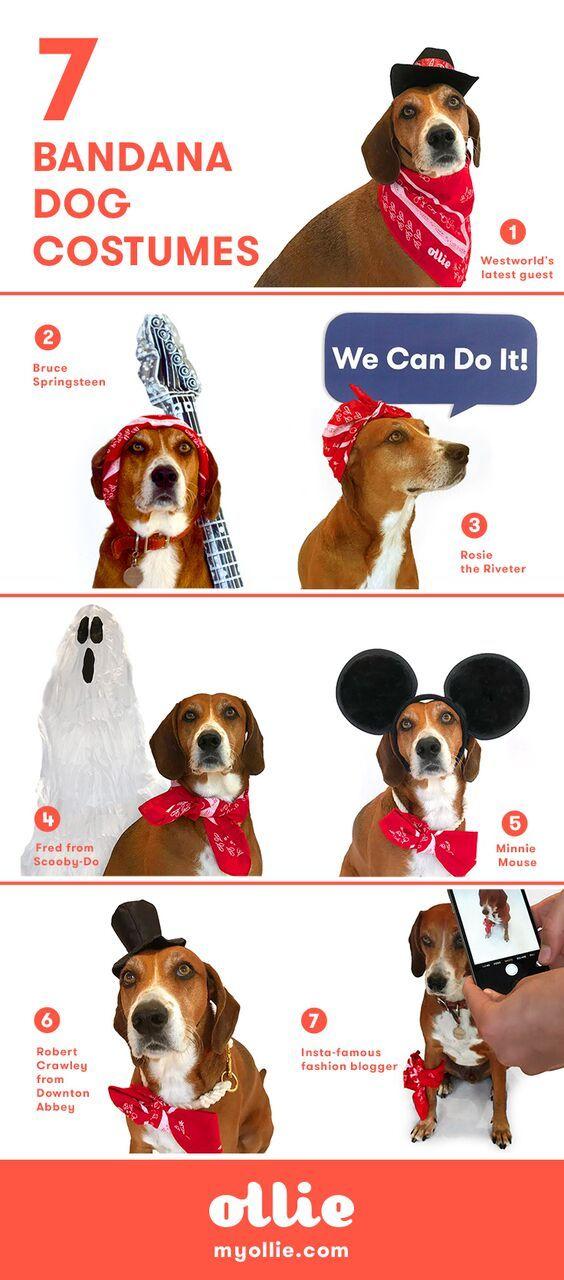Dog Halloween Costumes You Can Easily Make At Home Dogs Dog Halloween Dog Bandanna